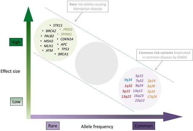 mucinous colorectal cancer rischio del papilloma virus