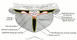 virus del papiloma humano hpv tratamiento