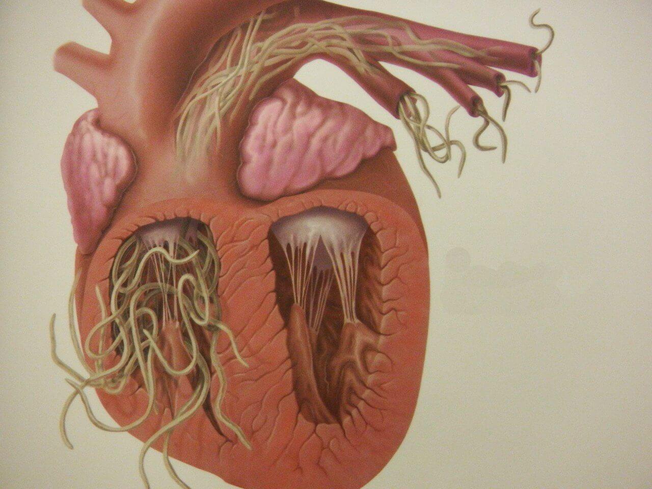 paraziti u telu