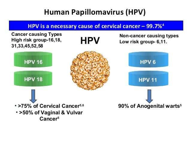 human papillomavirus 6 papillomavirus o que e