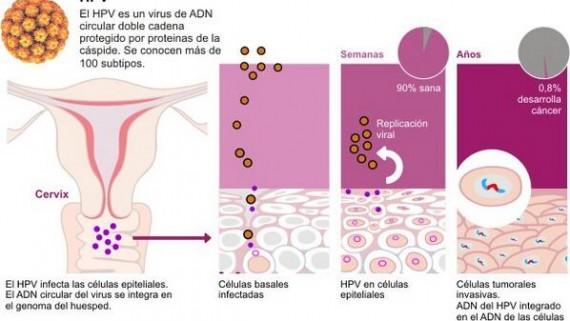 hpv cancer cells cancerul se ia prin saliva
