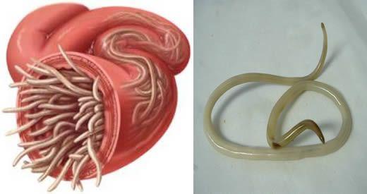 oxiuros huevos imagenes virus del papiloma humano en la boca como se contagia