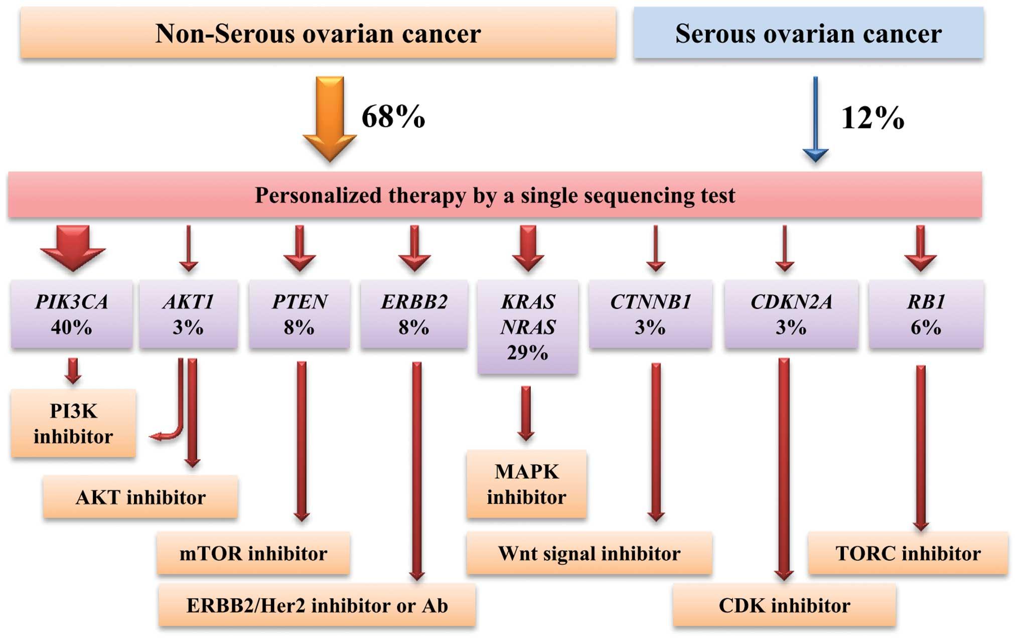 papillomavirus vaccin polemique hpv cervical cancer immunotherapy