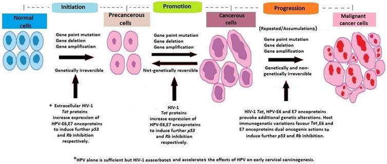 hpv cancer cells cervix