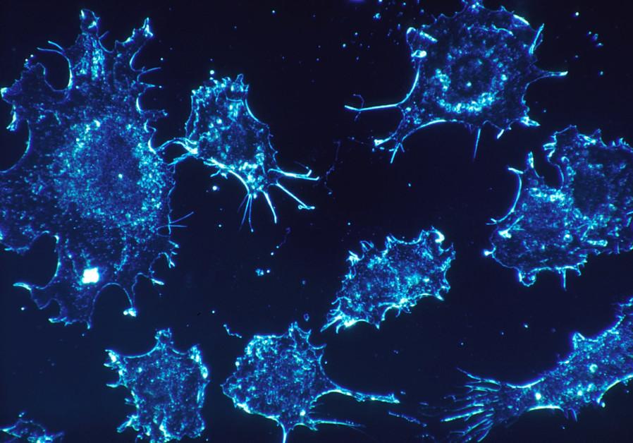 pancreatic cancer breakthrough como quitar el virus del papiloma humano en hombres