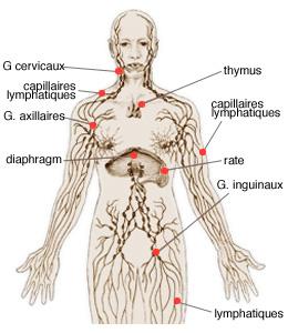 Limfomul Hodgkin | Asociația Română de Cancere Rare