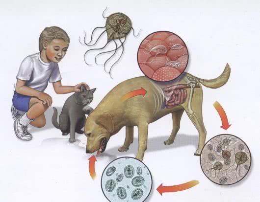 tratament pentru gripa diagnosi papilloma virus nelluomo