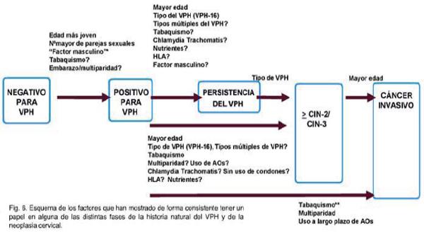 virus papiloma humano historia natural enfermedad cancerul de san clasificare