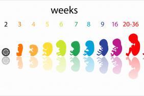 hpv et accouchement par voie basse