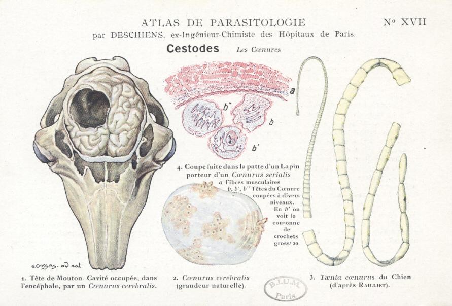 parazitoza cerebrala helminthic therapy scleroderma
