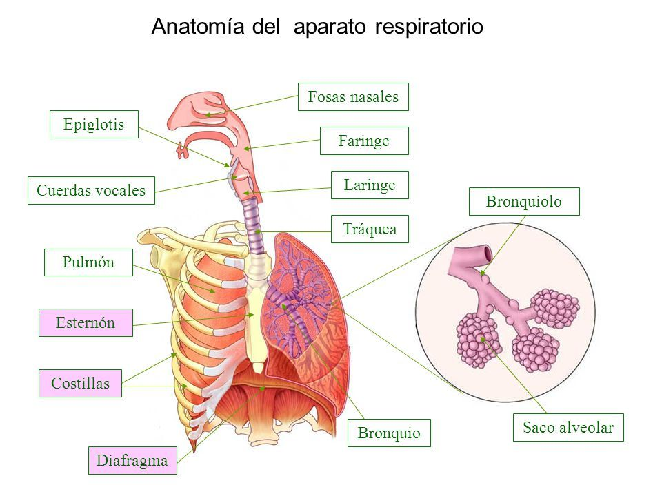 cancerul de col uterin dupa menopauza