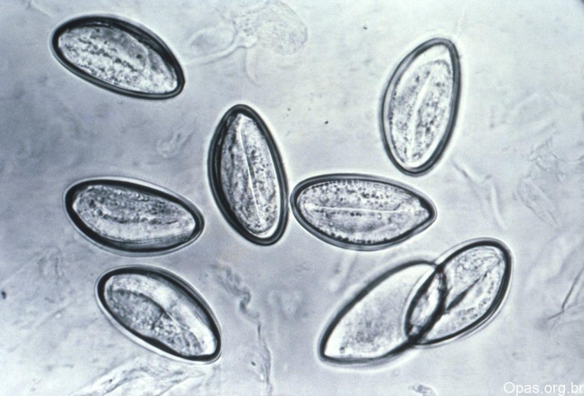 plante pentru detoxifierea sangelui cancer bucal gpc