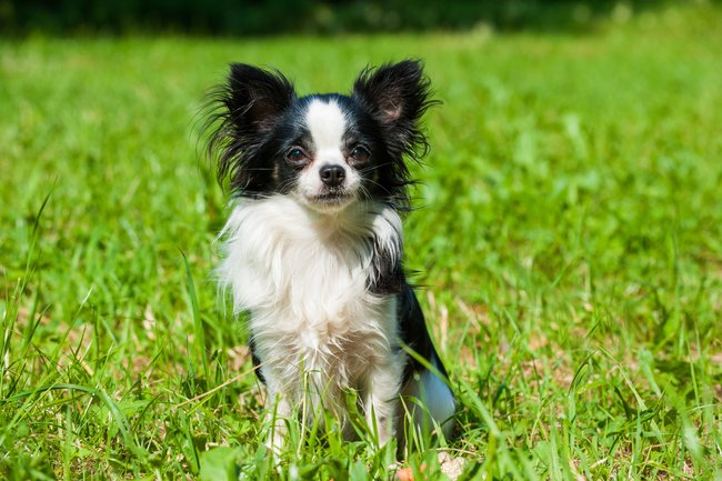 anemie u psa diskuze