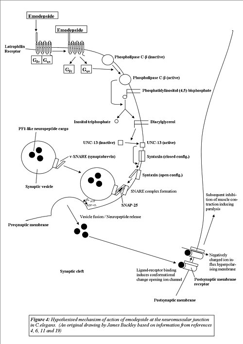 anthelmintic drugs mode of action