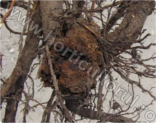 il papilloma virus porta prurito exista cancer malign si benign
