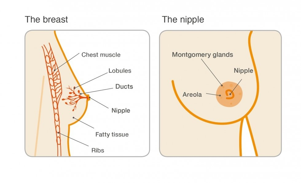 breastfeeding after intraductal papilloma