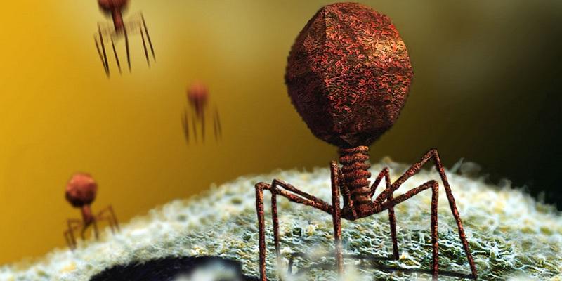 bacterii virusuri diferenta