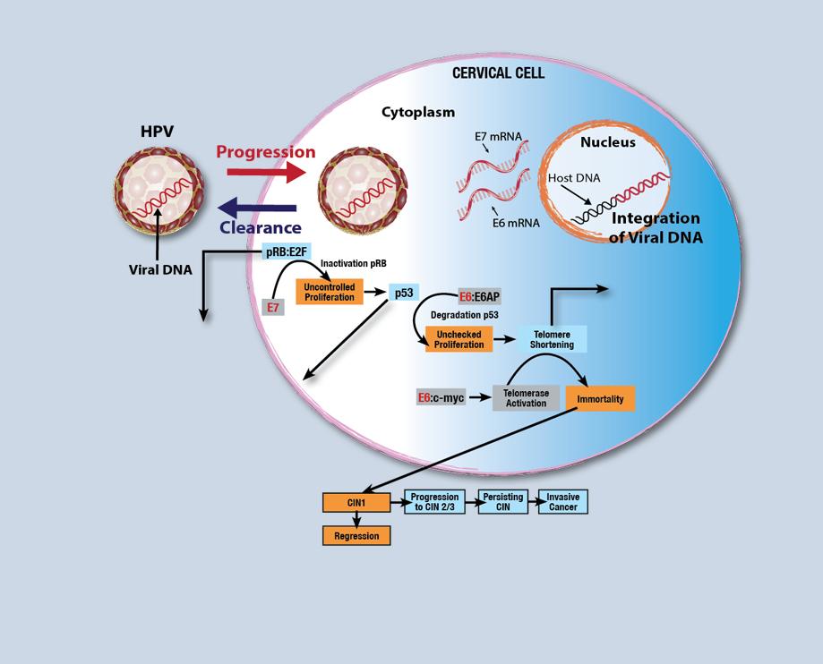 human papillomavirus in situ hybridization helminth immune cell