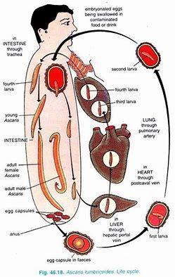 paraziti ascaris tratament cancer malign sau benign
