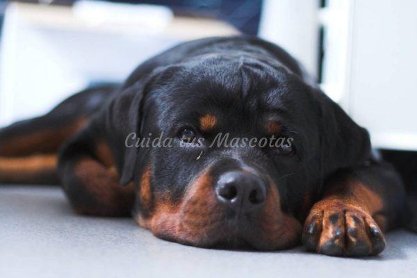 cancer bucal en perros human papillomavirus literature review