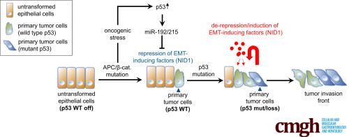 cancer colorectal p53 papiloma humano en genitales