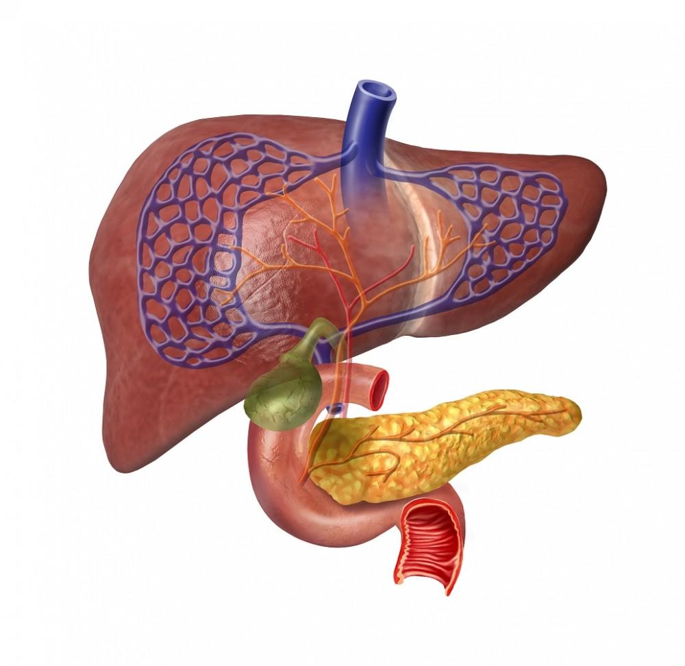 cancer ficat transplant papillomavirus sur amygdale