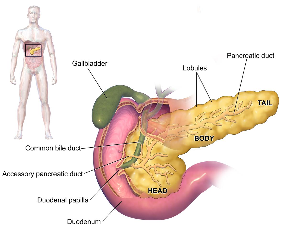 cancer pancreas bile duct