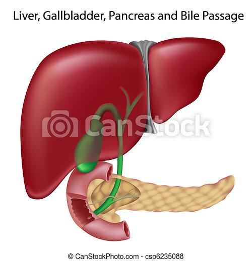 cancer pancreas ges