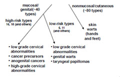 cancer papillomavirus transmission uterine cancer nhs