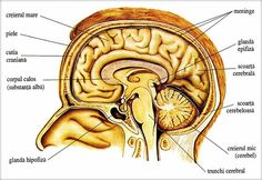 cancer trunchi cerebral hpv alle corde vocali