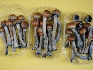 ciuperci efecte