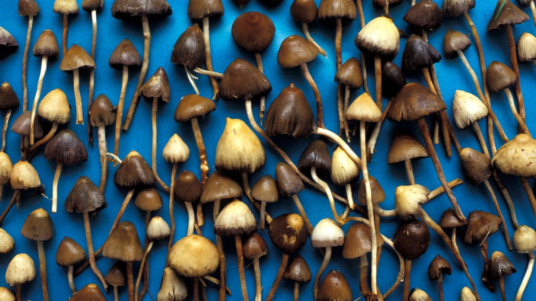 10 chestii care o să ți se întâmple după ce iei ciuperci halucinogene - VICE
