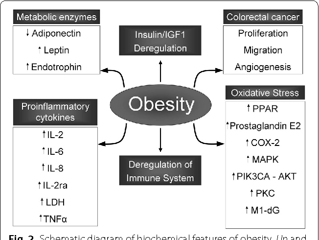 colorectal cancer and obesity hpv impfung jungen medikament