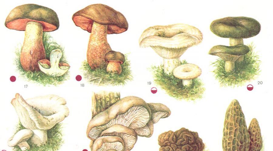 Lista ciupercilor otrăvitoare din pădurile României