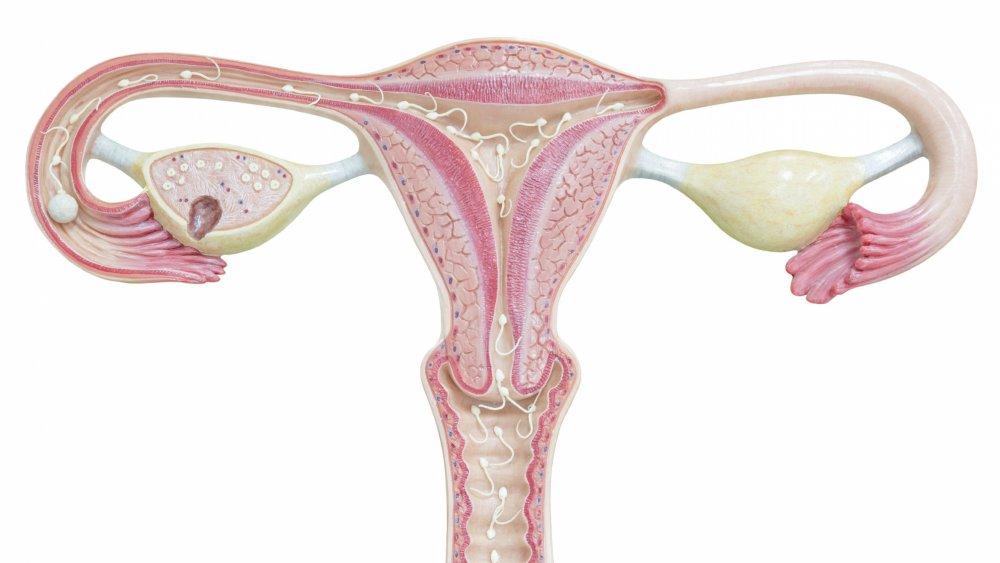 Osteoartrita de col uterin este de