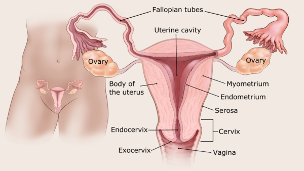 endometrial cancer definition hpv 16 and penile cancer