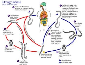 hpv cervix nhs simptomele la om difillobotriza