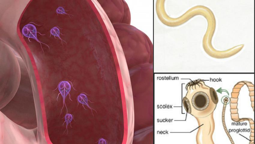viermi si paraziti intestinali la om