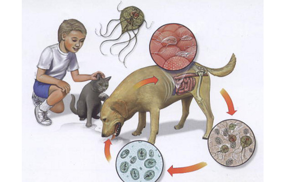 cancer renal cauze hpv virus jelei