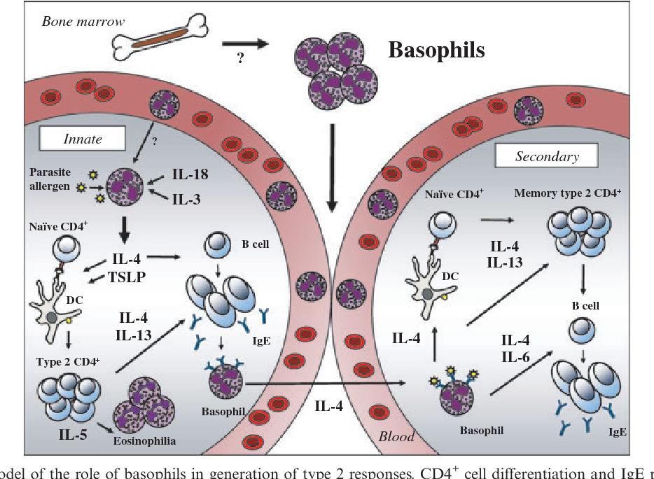 hpv virus manner ansteckung