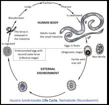 helminths vs parasitic worm