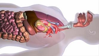 hpv esophagus symptoms cura de dezintoxicare cu usturoi