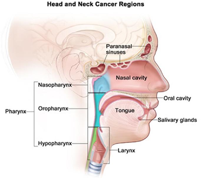 hpv nasal cavity papilloma virus terapia uomo