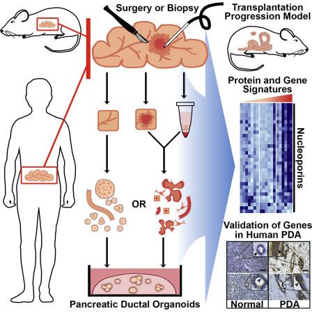 viermi intestinali la om tratament del papiloma humano virus