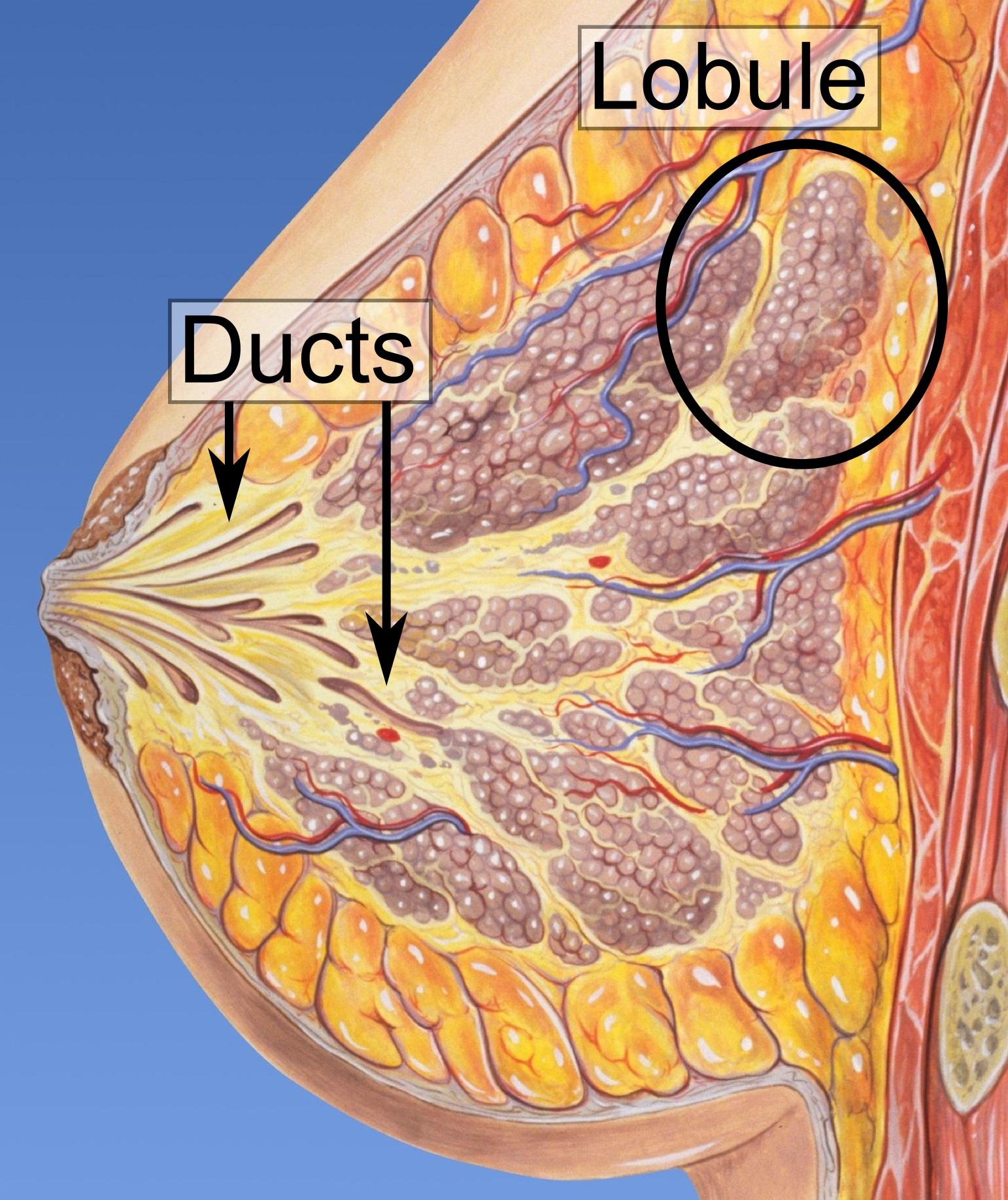 papilloma of breast icd 10