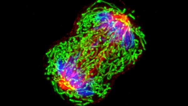 hpv gebarmutter behandlung cancer la plamani in metastaza
