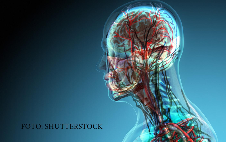 simptome cancer maduva spinarii