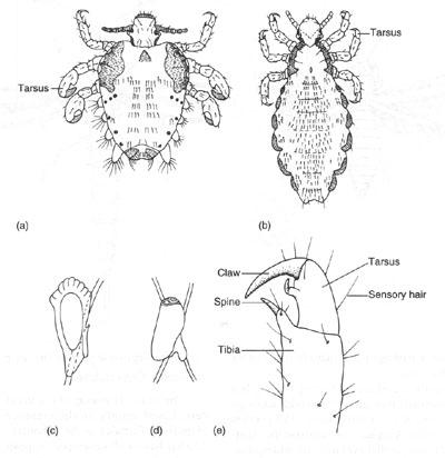 vanjski paraziti kod pasa