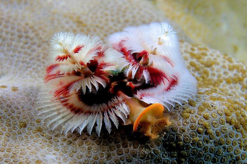 squamous papilloma child