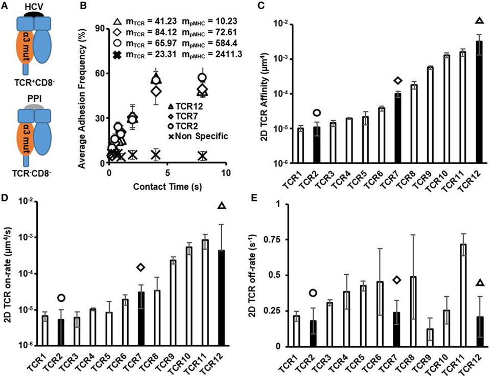 virusblock prospect hpv males vaccine